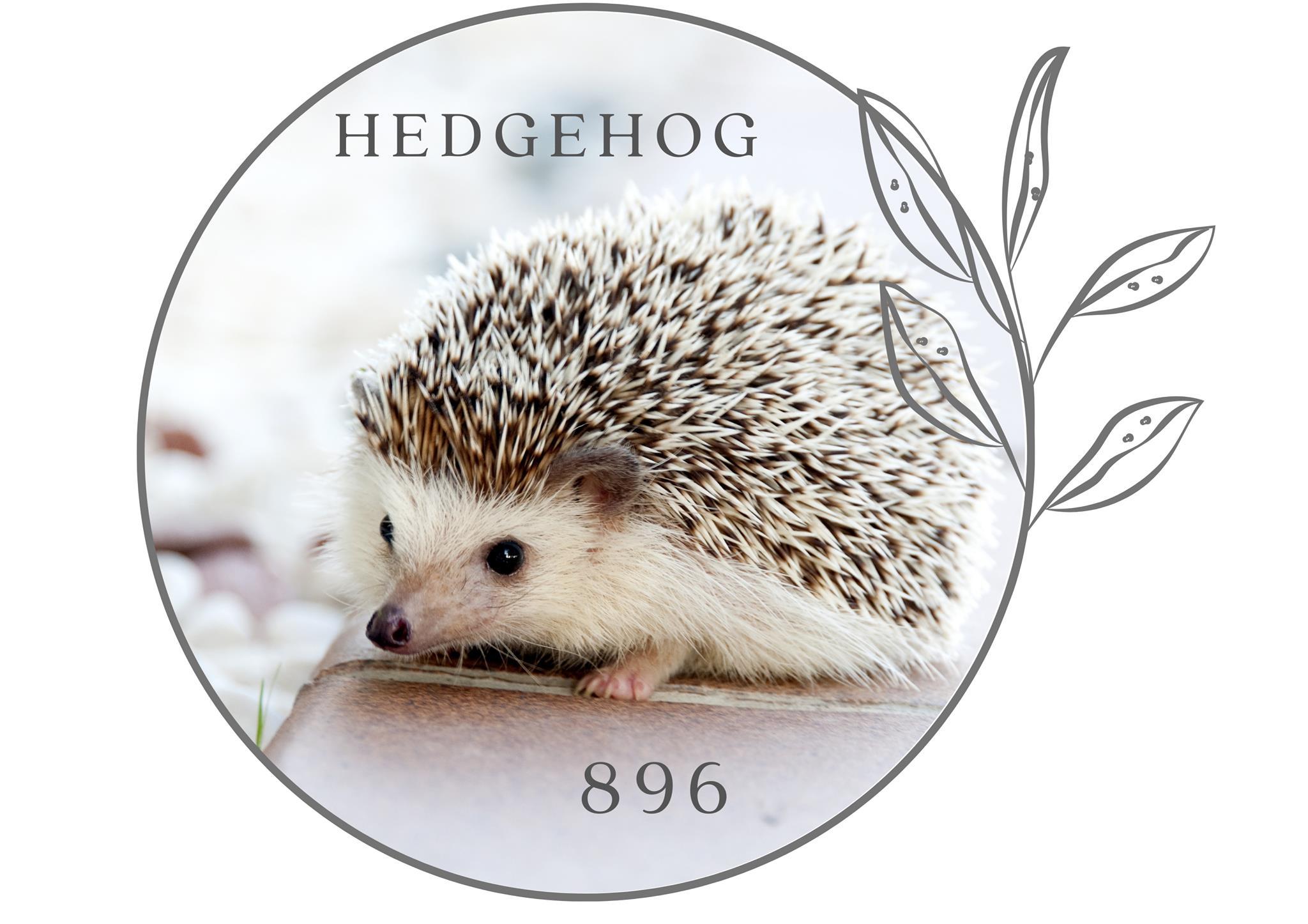 Hedgehog 896 - Marloth Park